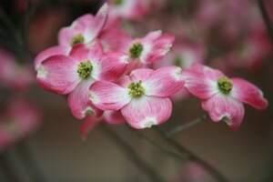 beautiful flowers at nsu